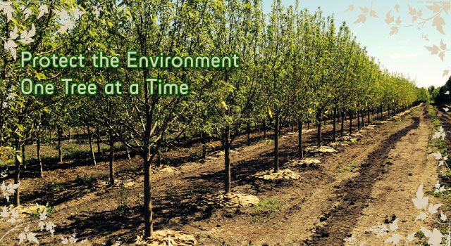 Protect the Environment One Tree at a Time - trees