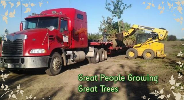 Great People Growing Great Trees - loading trees