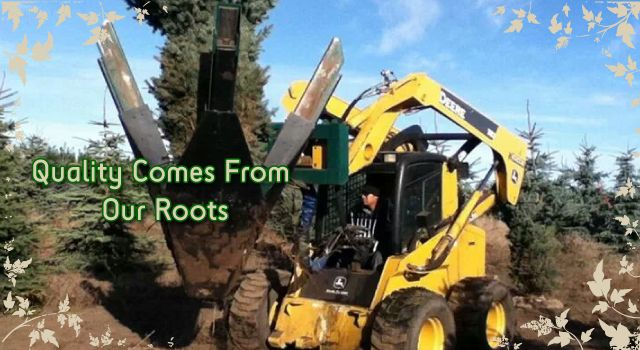 Our Quality Comes From Our Roots - moving trees