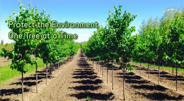 Protect the Environment One Tree at a Time - row of young trees