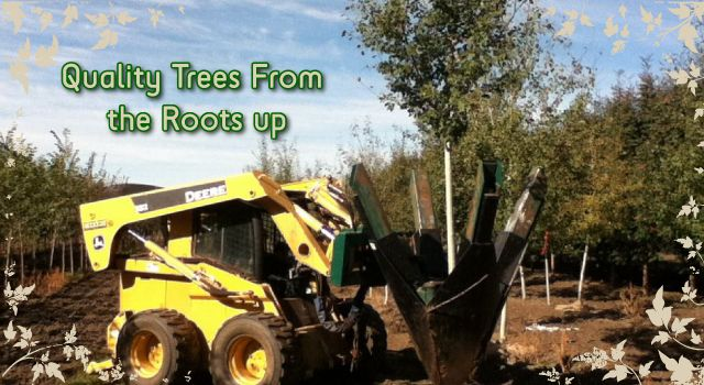 Quality Trees From The Roots Up - moving trees